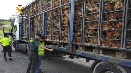 El Gobierno unifica las normas del registro que capacita para el transporte de animales vivos