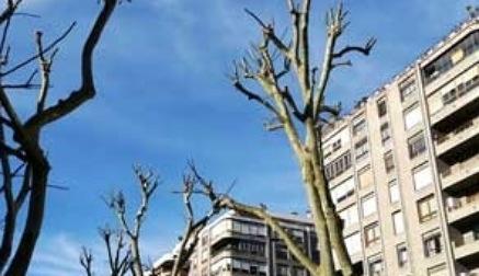 Piden detener las podas excesivas en Santander